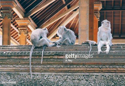 Monkey business : Stock Photo