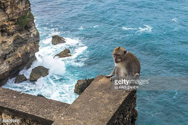 Monkey by the Sea | Uluwatu Sea Temple