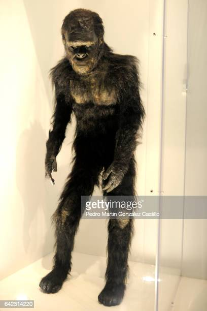 Monkey disguise from Stanley Kubrick's movie '2001 A Space Odyssey' is exhibited as part of the Stanley Kubrick 'La Exposicion' at Cineteca Nacional...