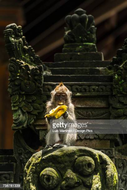 A monkey eating a banana while sitting on a sculpture, Monkey Forest