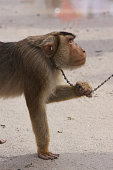 Monkey for Coconut