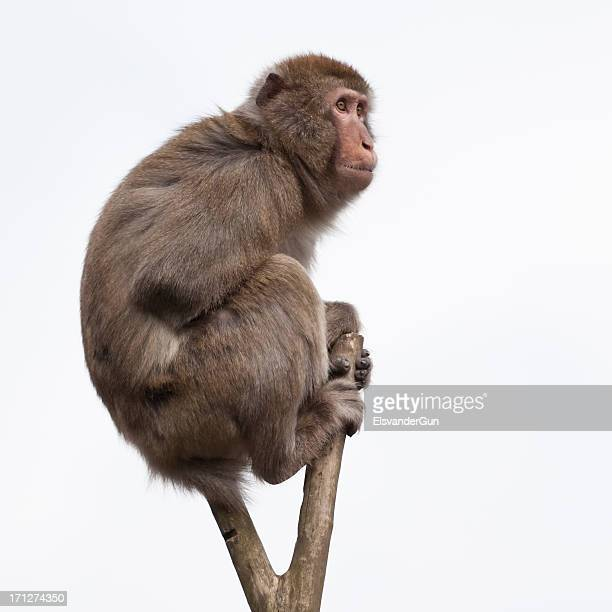 monkey in a bare treetop