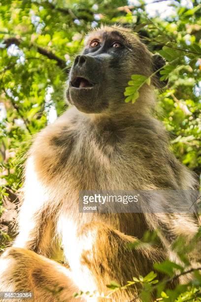 Monkey in a tree