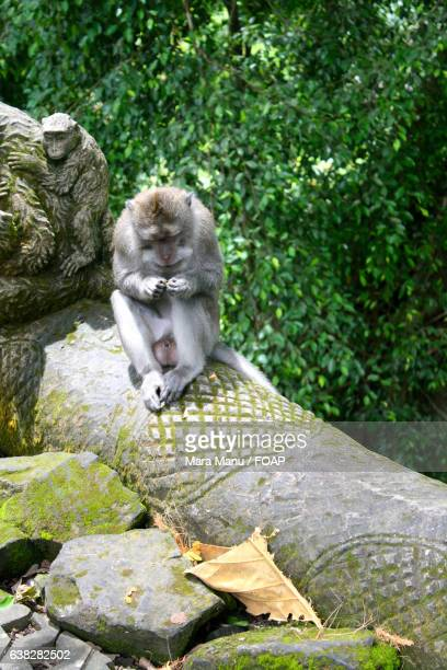 Monkey in Indonesia forest