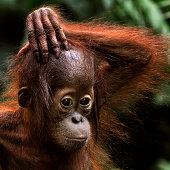 Monkey in Singapore zoo
