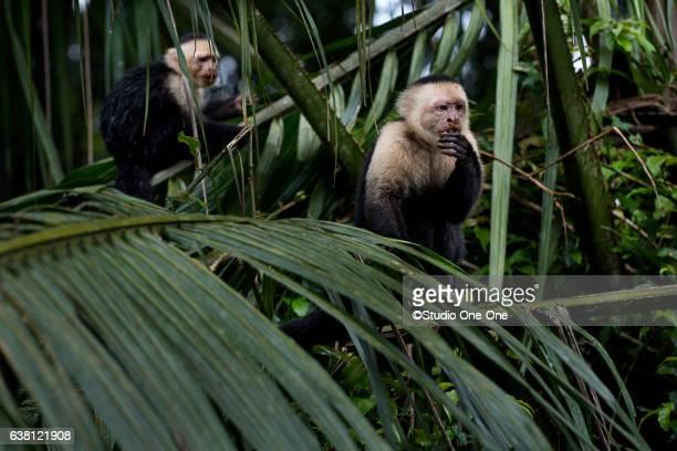 Monkey Lunch