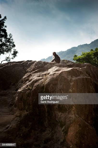 Monkey Mountain Takazaki Yama