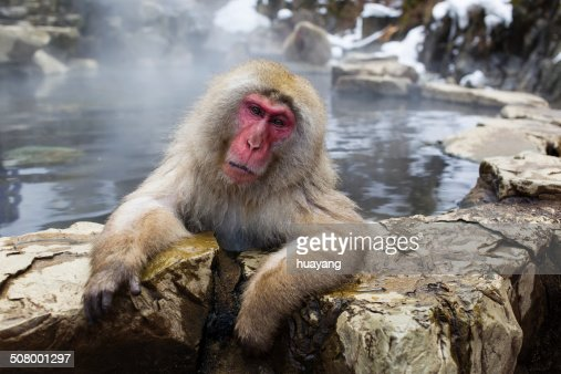 Monkey of Jigokudani Monkey Park