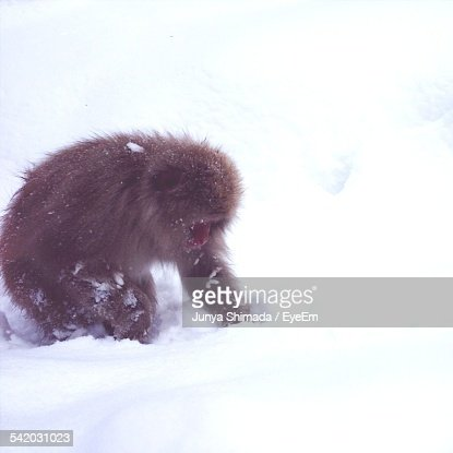 Monkey On Snow Covered Field During Winter