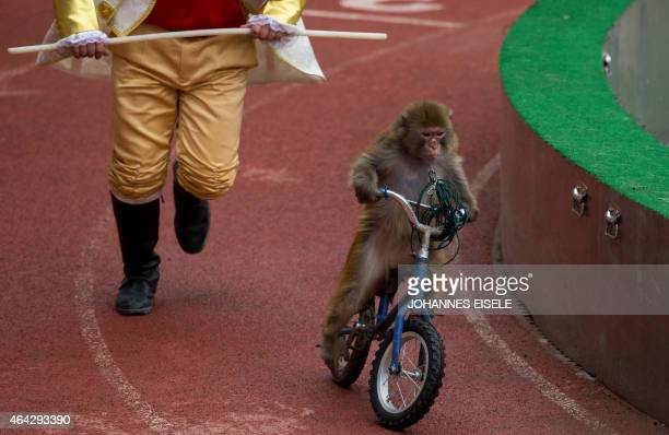 A monkey performs on a bike during a show at the Wild Animal Park one of the main tourist attractions during the Chinese Lunar New Year holidays in...