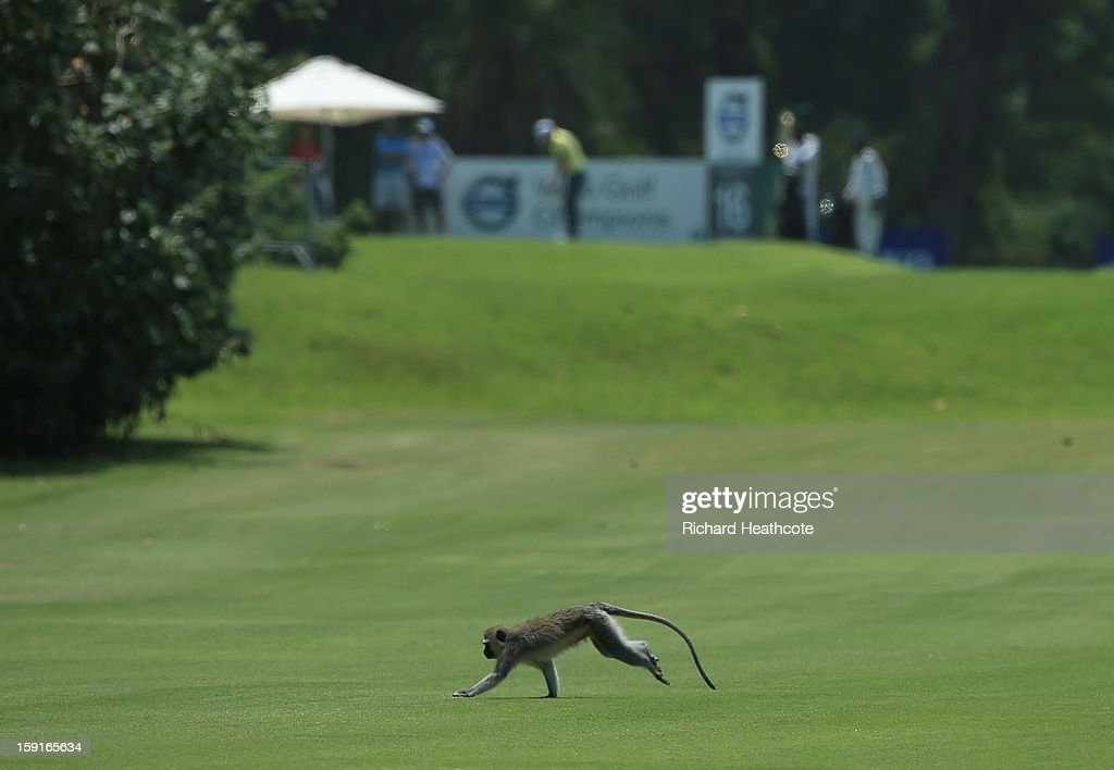A monkey runs across a fairway during the Pro-Am for the Volvo Champions at Durban Country Club on January 9, 2013 in Durban, South Africa.