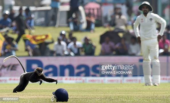 A monkey runs on the ground as Indian cricketer Bhuvneshwar Kumar looks on during the third day of the opening Test match between Sri Lanka and India...
