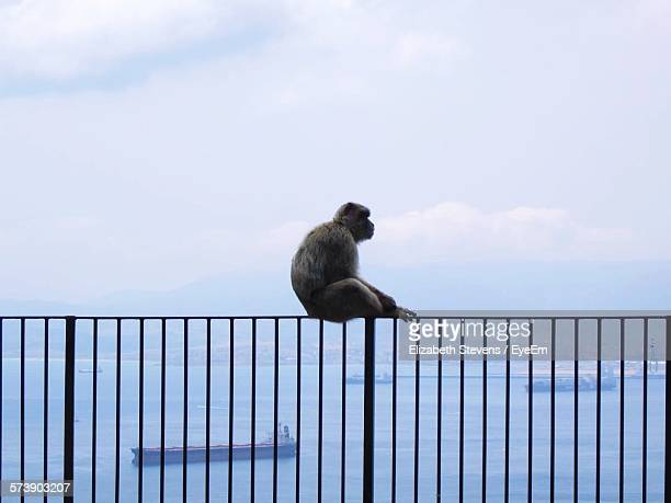 Monkey Sitting On Railing By Sea Against Cloudy Sky