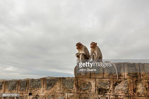 Monkey sitting on rock wall
