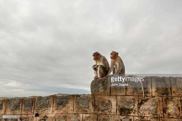 Monkey sitting on rock wall
