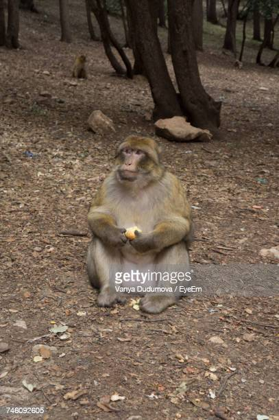 Monkey With Food Sitting In Forest