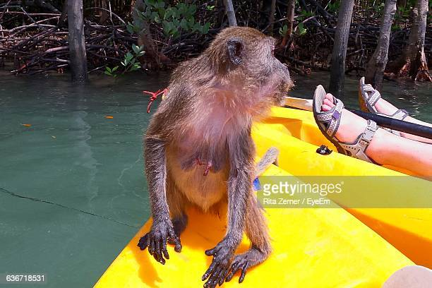 Monkey With Person On Kayak In Lake