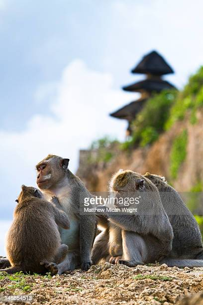 Monkeys at Uluwatu temple.