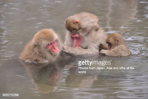 mozu the snow monkey the japanese Amazonca - buy mozu the snow monkey meet mozu, a heroic japanese macaque who overcame severe birth defects to live a long and productive life.