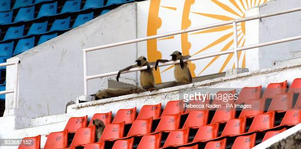 Monkeys in the main grandstand watch England during a nets practice session at the Sardar Patel Stadium Ahmedabad India