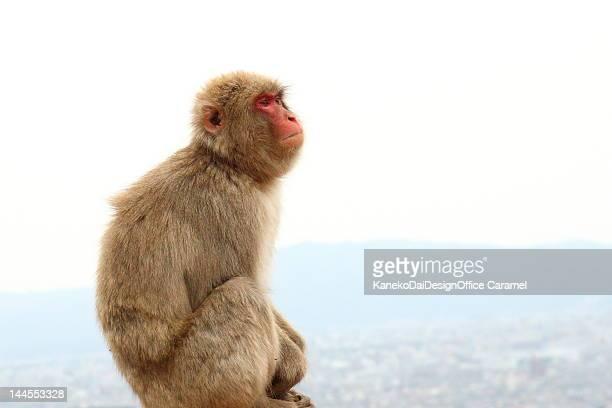 Monkeys of Arashiyama