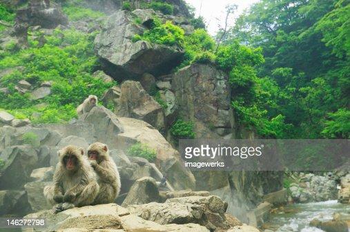 Monkeys relaxing on rock