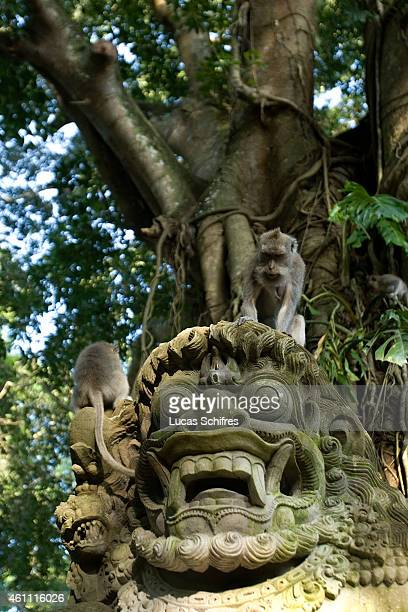 Monkeys sit on a statue in Ubud Monkey Forest on February 20 2010 in Ubud Central Bali Indonesia
