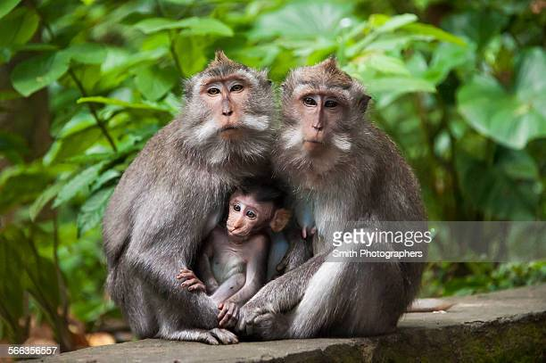 Monkeys sitting on stone banister