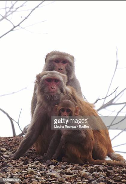 Monkeys With Infant Sitting Against Sky On Stones