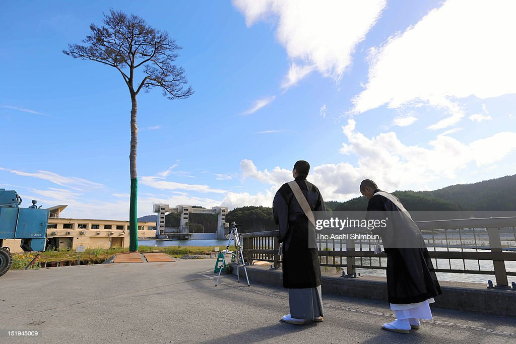 Monks pray towards the single pine tree on September 11, 2012 in Rikuzentakata, Iwate, Japan. 18 months on, still 2,814 people are missing and 340,000 people are forced to live at temporary housing.