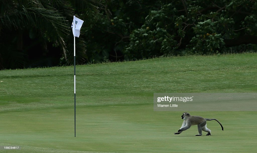 A monley runs across the fourth green during the first round of the Volvo Golf Champions at Durban Country Club on January 10, 2013 in Durban, South Africa.