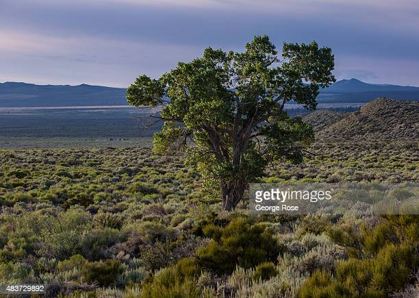 Mono Lake a large briney body of water on the eastern flank of the High Sierra Mountains is home to hundreds of species of birds and an array of...