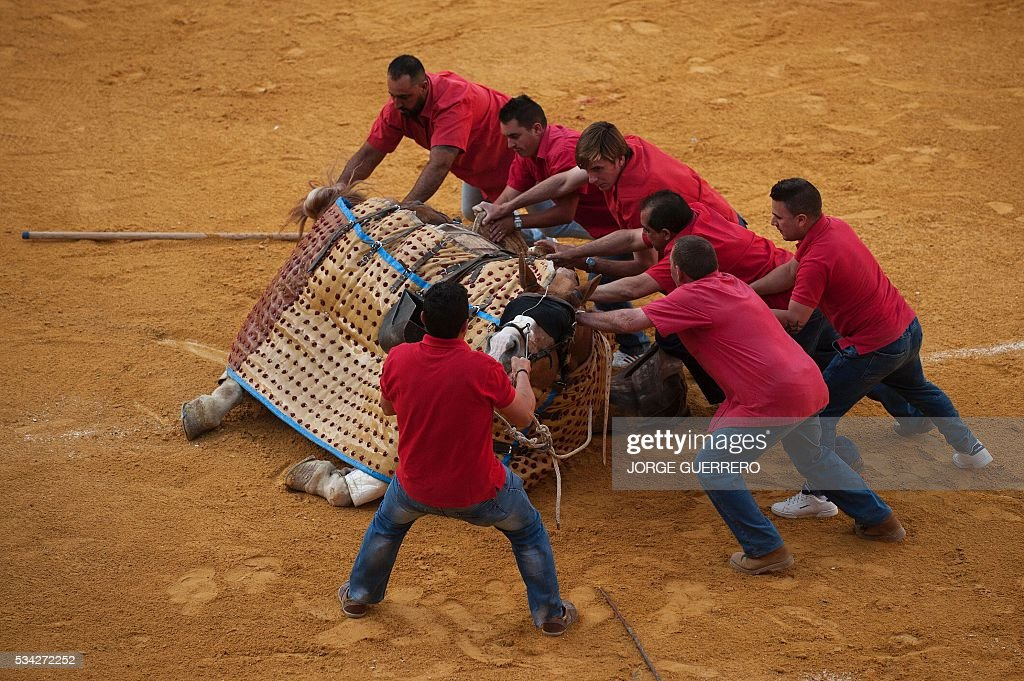 'Monosabios' (picador's assistants) help picador's horse to get up after being knocked down by the bull during the Corpus bullfight festival at the bullring of Granada on May 25, 2016. / AFP / JORGE