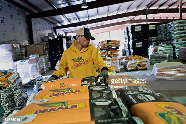 Monsanto Co DeKalb brand seed corn is sorted in a warehouse at the Crop Protection Services facility in Manlius Illinois US on Friday March 20 2015...