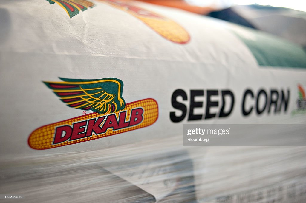 Monsanto Co. DeKalb brand seed corn sits on a palate at a farm in Princeton, Illinois, U.S., on Wednesday, April 3, 2013. Monsanto Co., the world's largest seed company, raised its full-year earnings forecast and posted fiscal second-quarter profit that beat analysts' estimates as sales of corn seed and Roundup weed killer climbed. Photographer: Daniel Acker/Bloomberg via Getty Images