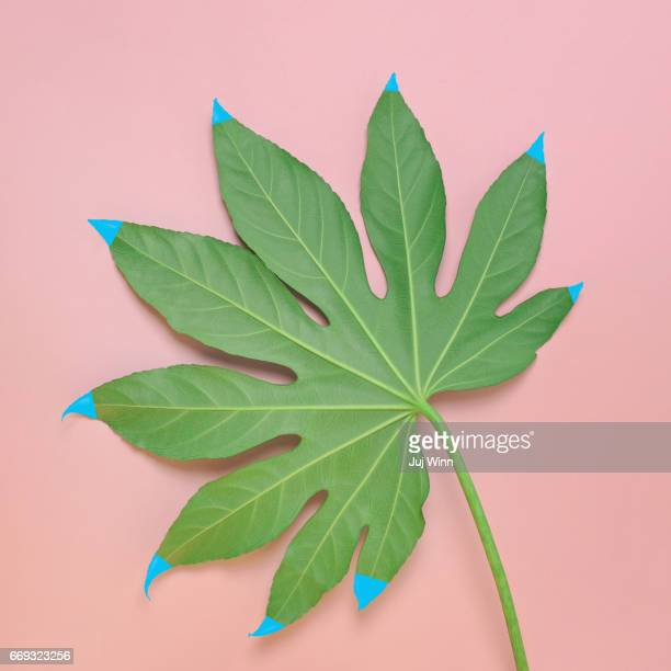 Monstera leaf with painted tips