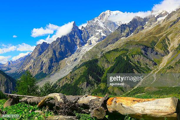 Mont Blanc idyllic alpine landscape, pine trunk woods, Aosta Valley