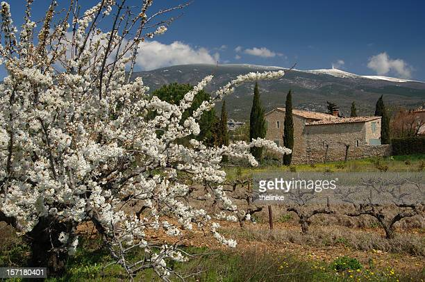 Mont Ventoux au printemps