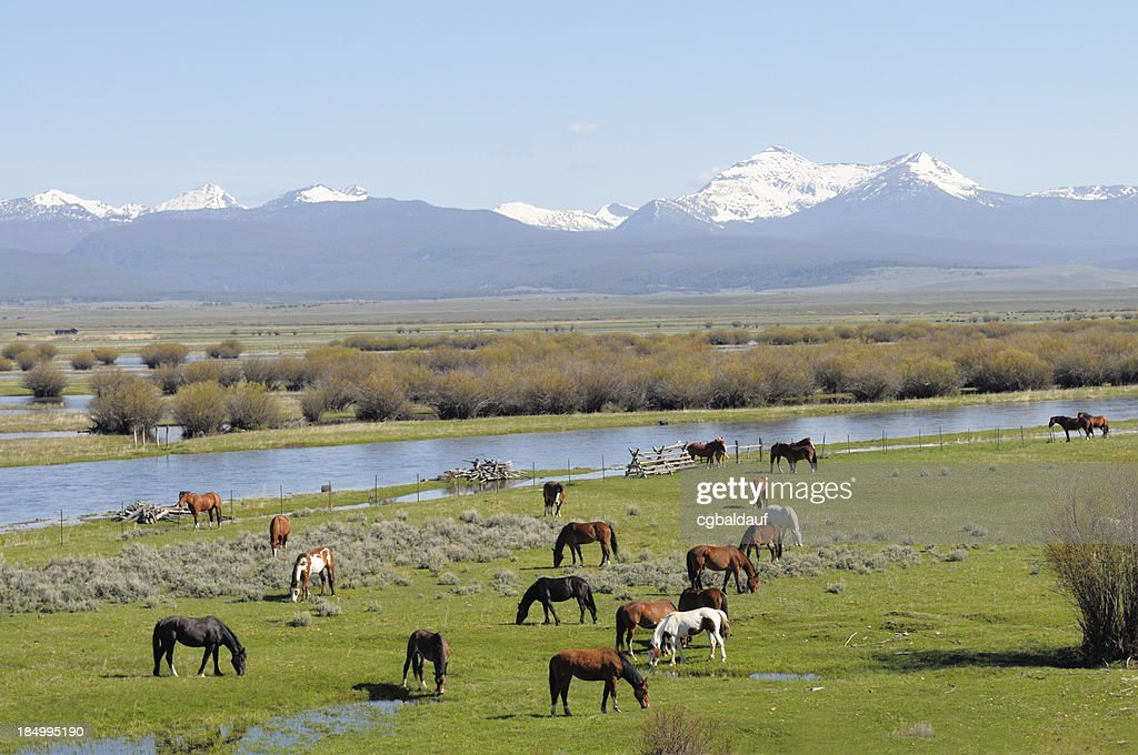 Montana Valley with Horses Grazing