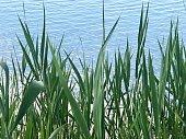 Bayside Peace Plants