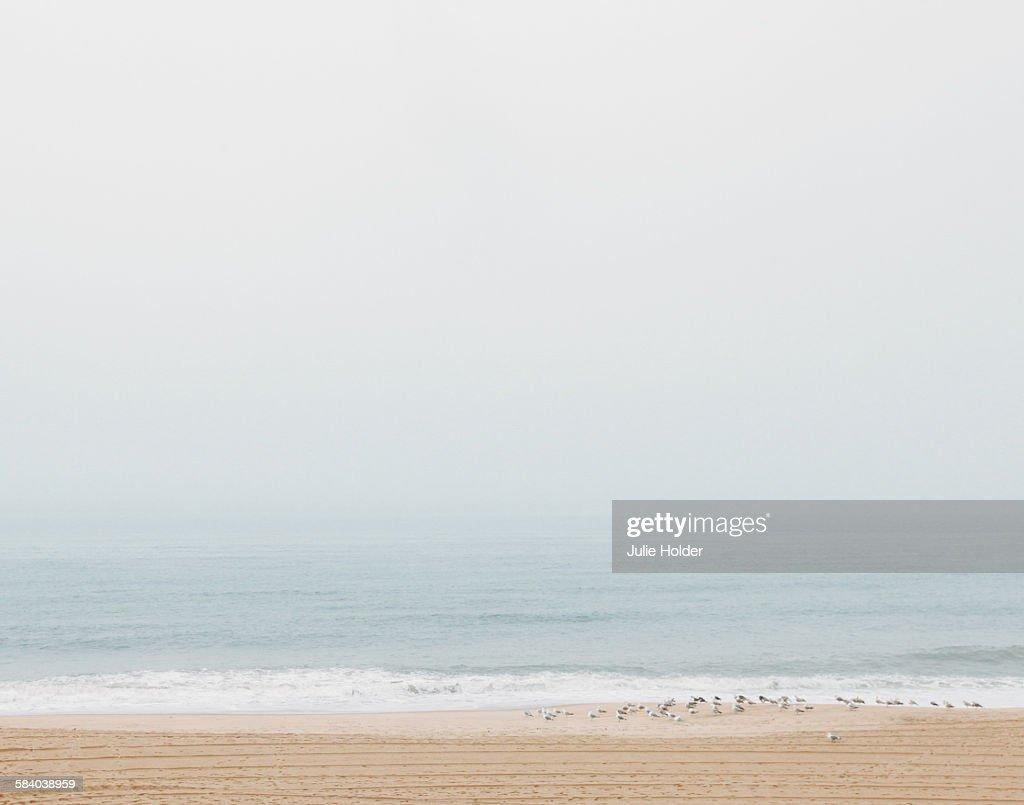 Montauk, New York Beach