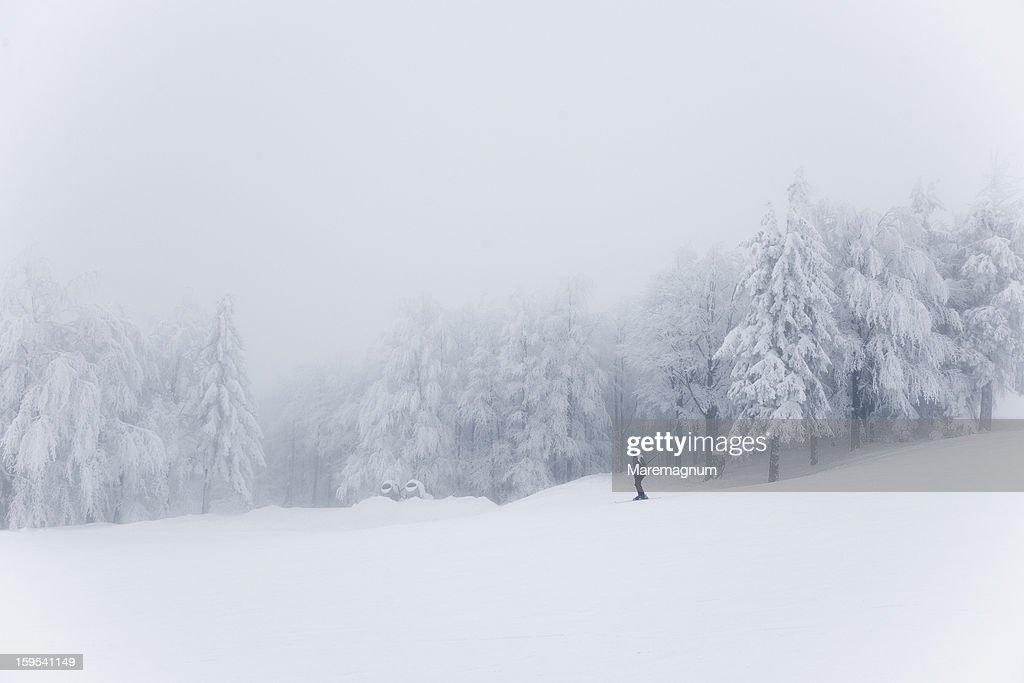 Monte Cimone, Tana del Lupo ski track : Stock Photo