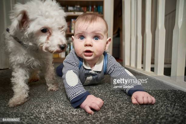 7 month old baby and small dog