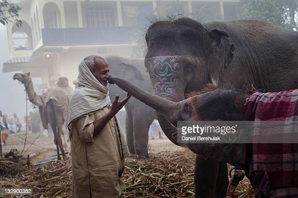 13 month old elephant Rania stretches her trunk out to touch the nose of her mahut during the Sonepur Mela on November 15 2011 in Sonepur near Patna...