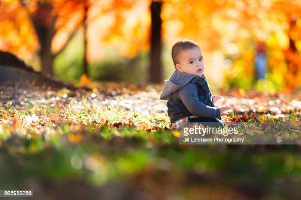 15 Month Old Fraternal Twin Sits In the Autumn Leaves During Late Afternoon