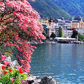 A beautiful spring landscape with flowers and blooming magnolia branch, Lake Geneva and view of Montreux, Switzerland. Selective focus. Square toned image, instagram effect