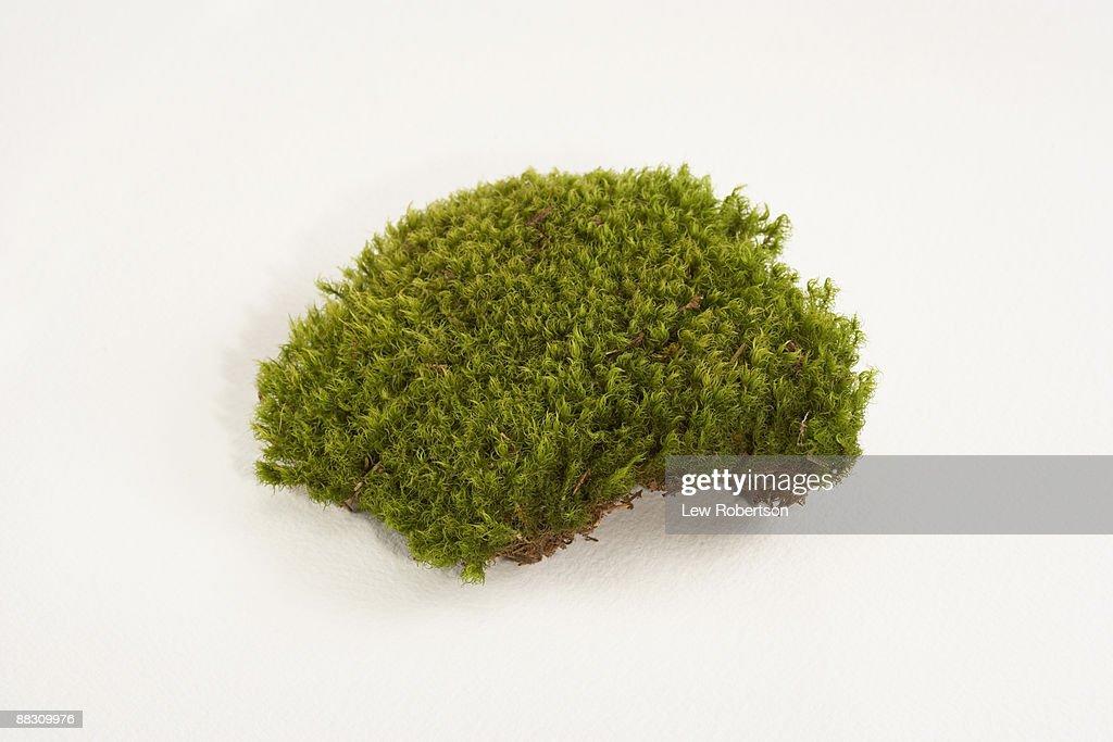 Mood Moss