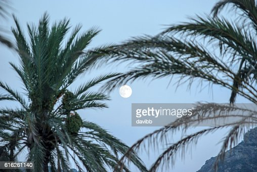 Moon and tree palms : Stock Photo
