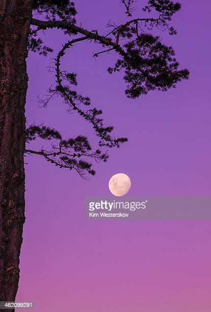Moon in mauve evening sky