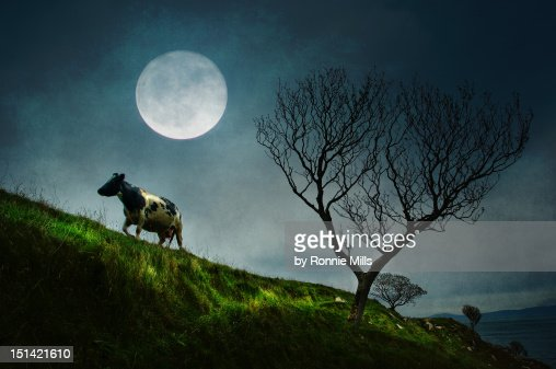Moon light : Stock-Foto